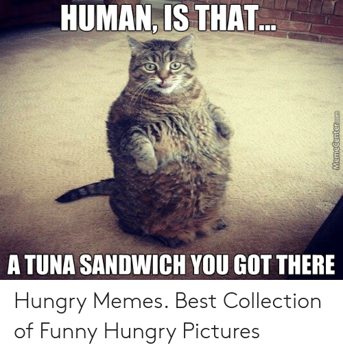 Hungry Pictures: HUMAN, IS THAT  A TUNA SANDWICH YOU GOT THERE Hungry Memes. Best Collection of Funny Hungry Pictures