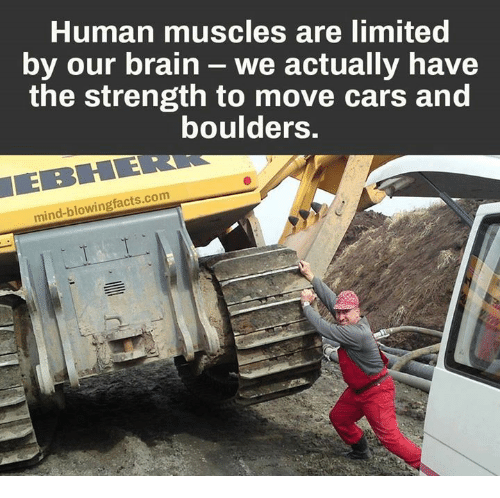 human muscles are limited by our brain we actually have the, Muscles