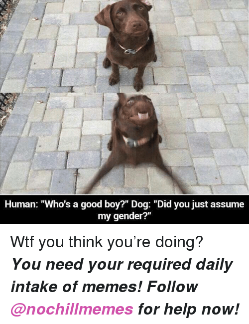 """Assume My Gender: Human: """"Who's a good boy?"""" Dog: """"Did you just assume  my gender?"""" <p>Wtf you think you're doing?</p><p><b><i>You need your required daily intake of memes! Follow <a>@nochillmemes</a> for help now!</i></b><br/></p>"""