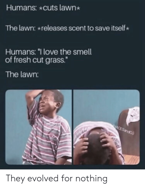 """Lawn: Humans: cuts lawn  The lawn: releases scent to save itself  Humans: """"I love the smell  of fresh cut grass.""""  The lawn:  HACESandCo They evolved for nothing"""