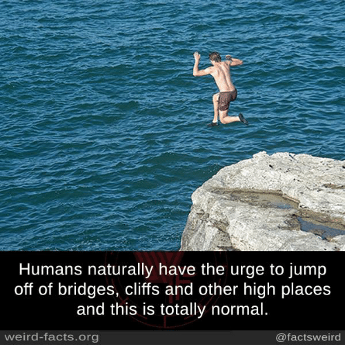 Memes, Jumped, and 🤖: Humans naturally have the urge to jump  off of bridges, cliffs and other high places  and this is totally normal.  weird-facts org  @facts weird