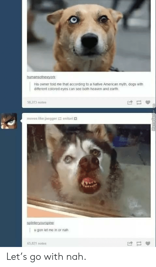 ita: humansotnewryork  His owner told me that according to a Native American myth, dogs with  different colored eyes can see both heaven and earth  53,273 notes  は 間  movesli kejaegger  en ita ri。  splinteryourspine  u gon let me in or nah  65,821 notes Let's go with nah.