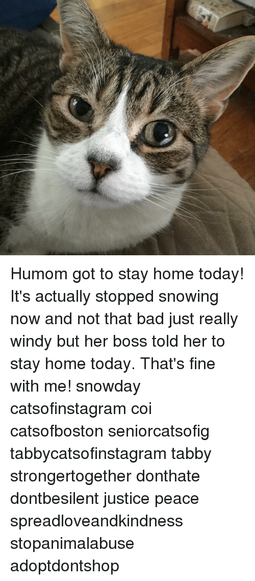 Stop Snowing: Humom got to stay home today! It's actually stopped snowing now and not that bad just really windy but her boss told her to stay home today. That's fine with me! snowday catsofinstagram coi catsofboston seniorcatsofig tabbycatsofinstagram tabby strongertogether donthate dontbesilent justice peace spreadloveandkindness stopanimalabuse adoptdontshop
