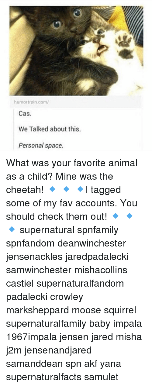 Memes, Animal, and Cheetah: humor train com/  Cas  We Talked about this.  Personal space. What was your favorite animal as a child? Mine was the cheetah! 🔹 🔹 🔹I tagged some of my fav accounts. You should check them out! 🔹 🔹 🔹 supernatural spnfamily spnfandom deanwinchester jensenackles jaredpadalecki samwinchester mishacollins castiel supernaturalfandom padalecki crowley marksheppard moose squirrel supernaturalfamily baby impala 1967impala jensen jared misha j2m jensenandjared samanddean spn akf yana supernaturalfacts samulet
