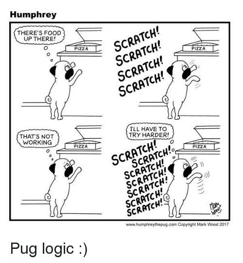 Memes, Pizza, and Pugs: Humphrey  THERE'S FOOD  UP THERE!  THAT'S NOT  WORKING  PIZZA  PIZZA  SCRATCH!  PIZZA  SCRA  ILL HAVE TO  TRY HARDER!  PIZZA  SCRATCH!  SCRATCH!  www.humphreythepug.com Copyright Mark Wood 2017 Pug logic :)