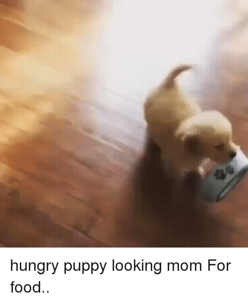 Funny, Hungry, and Moms: hungry puppy looking mom For food..