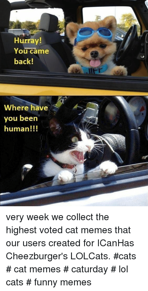 LOLcats: Hurray!  You came  back!  Where have  you beern  human!!! very week we collect the highest voted cat memes that our users created for ICanHas Cheezburger's LOLCats. #cats # cat memes # caturday # lol cats # funny memes