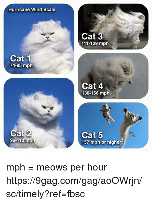 gagging: Hurricane Wind Scale  Cat 3  111-129 mph  Cat 1  74-95 mplh  Cat 4  130-156 mph  Cat 2  96-110 mph  Cat 5  157 mph or higher mph = meows per hour https://9gag.com/gag/aoOWrjn/sc/timely?ref=fbsc