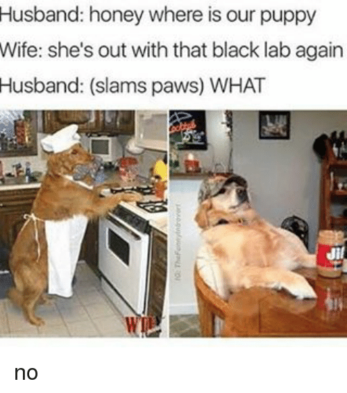 Dank Memes: Husband: honey where is our puppy  Wife: she's out with that black lab again  Husband: (slams paws) WHAT no