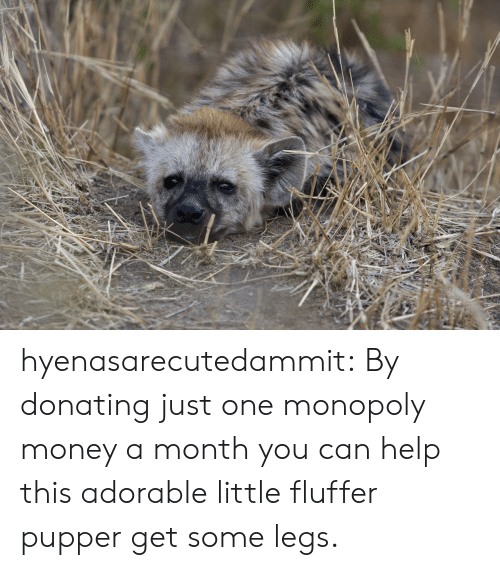 pupper: hyenasarecutedammit:  By donating just one monopoly money a month you can help this adorable little fluffer pupper get some legs.
