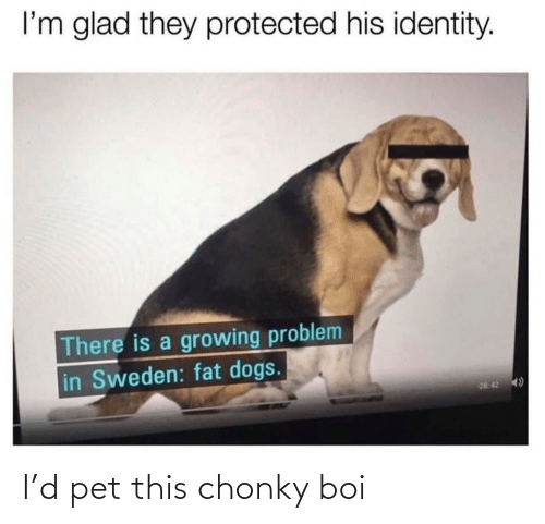 pet: I'd pet this chonky boi