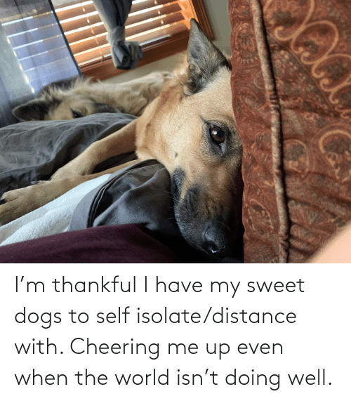 cheering: I'm thankful I have my sweet dogs to self isolate/distance with. Cheering me up even when the world isn't doing well.