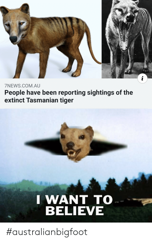 tasmanian tiger: i  7NEWS.COM.AU  People have been reporting sightings of the  extinct Tasmanian tiger  I WANT TO  BELIEVE #australianbigfoot