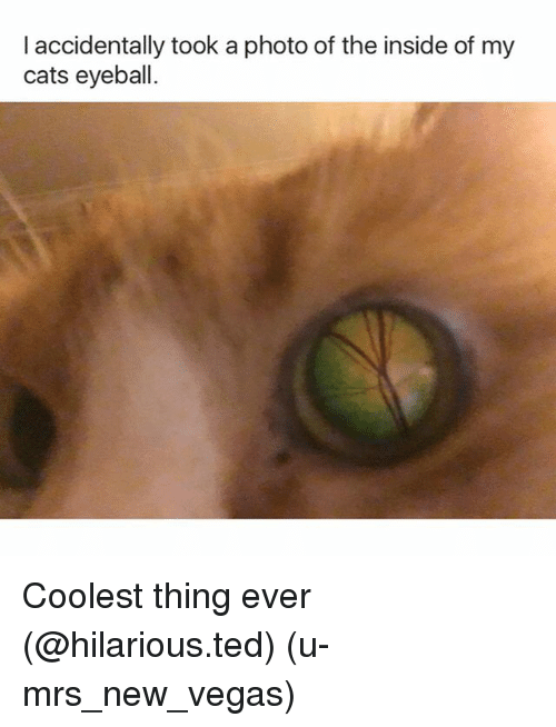 Cats, Funny, and Ted: I accidentally took a photo of the inside of my  cats eyeball. Coolest thing ever (@hilarious.ted) (u-mrs_new_vegas)
