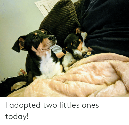 Littles: I adopted two littles ones today!