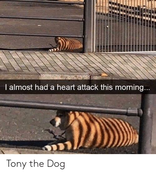heart attack: I almost had a heart attack this morning... Tony the Dog