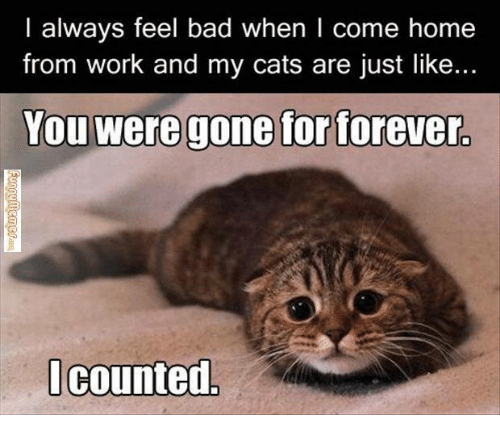 funny things cats do