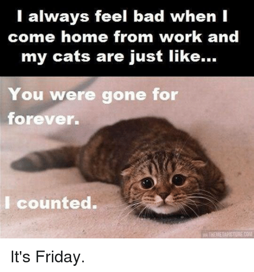 Bad, Friday, and It's Friday: I always feel bad when I  come home from work and  my cats are just like...  You were gone for  forever.  I counted. It's Friday.