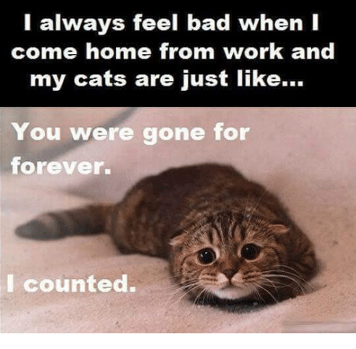 Memes, Coming Home, and 🤖: I always feel bad when I  come home from work and  my cats are just like...  You were gone for  forever.  I counted.