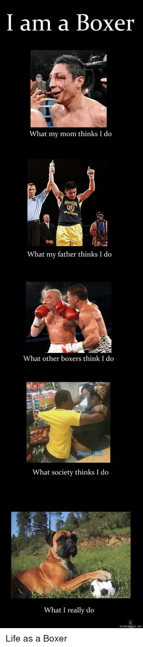 What My Mom Thinks I Do: I am a Boxer  What my mom thinks I do  What my father thinks I do  What other boxers think I do  Dime Wars  What society thinks I do  What I really do  RIEMURASIA. NET Life as a Boxer