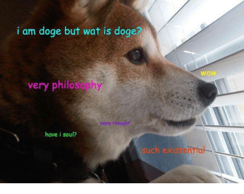 Dogee: i am doge but wat is doge?  wow  very philasophy  have i soul?  uch ex