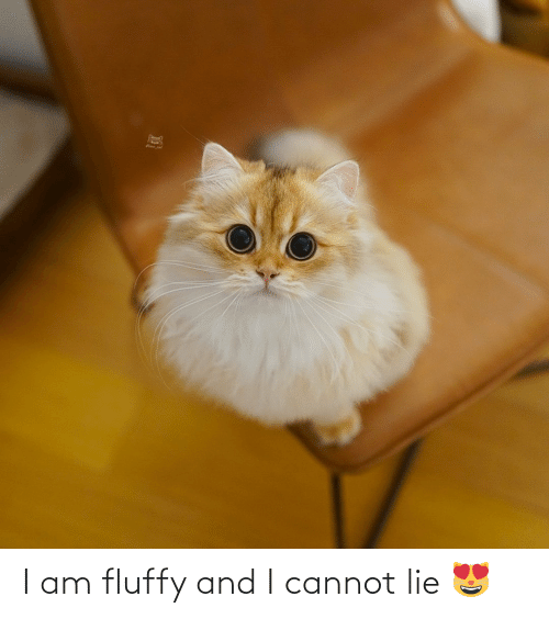 And I Cannot Lie: I am fluffy and I cannot lie 😻