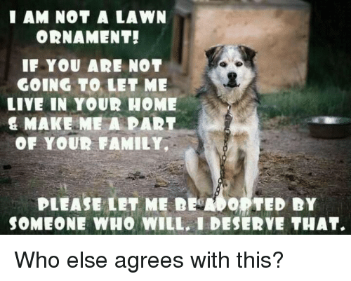 Ðÿ': I AM NOT A LAWN  ORNAMENT!  IF YOU AR NOT  GOING TO LET ME  LIVE IN YOUR HOME  & MAKE ME A PART  OF YOUR FAMILY,  PLEASE LET ME DEMO。 TED DY  SOMEONE WHO WILL, I DESERVE THAT. Who else agrees with this?