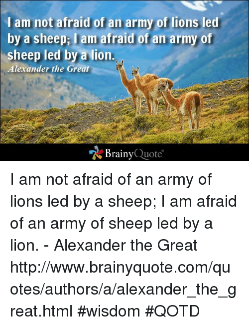 I Am Not Afraid Of An Army Of Lions Led By A Sheepi Lam Afraid Of An Classy Pictures Of Lion With Diss Quotes
