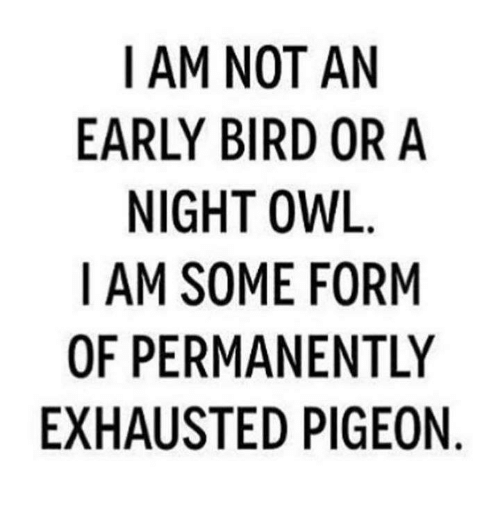 fep: I AM NOT AN  EARLY BIRD OR A  NIGHT OWL  I AM SOME FORM  OF PERMANENTLY  EXHAUSTED PIGEON  YN  NIO  NR  RIE  A0  ON IG  FEP  TD  OROEN  N BI TMA  OMT  MYGS  RS  EU  IR NI M  MPA  -A  AFH  10X