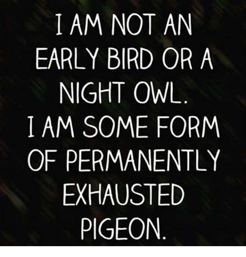 Image result for early bird or night owl tumblr