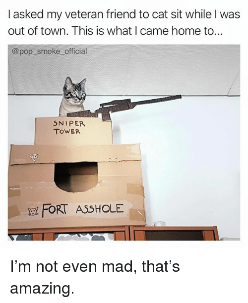 Memes, Pop, and Home: I asked my veteran friend to cat sit while I was  out of town. This is what I came home to.  @pop smoke offical  5NIPE  TOWER  FORT ASSHOLE I'm not even mad, that's amazing.