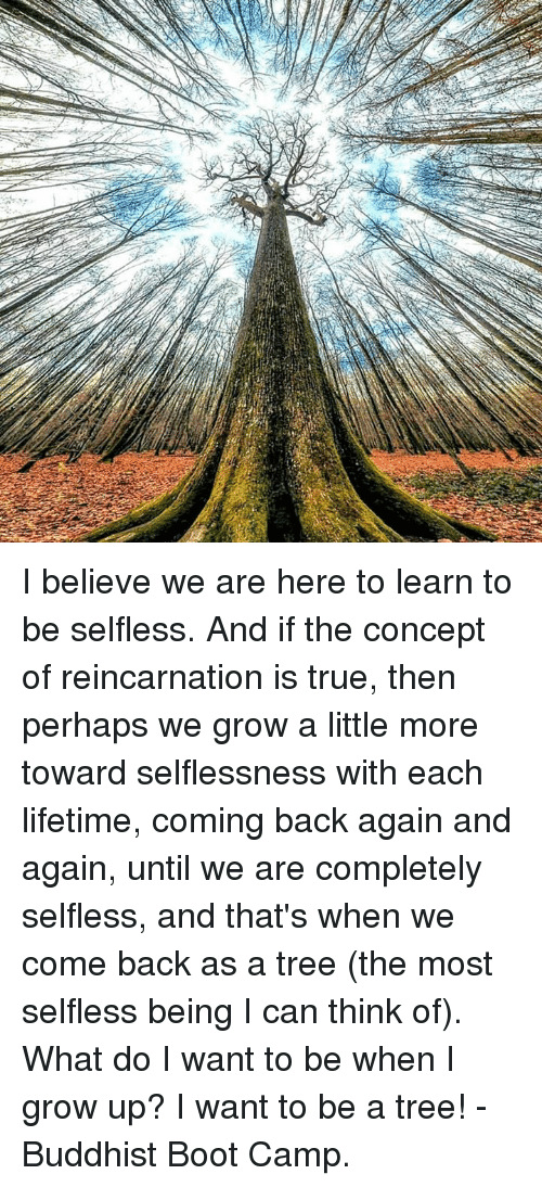 Perhapes: I believe we are here to learn to be selfless. And if the concept of reincarnation is true, then perhaps we grow a little more toward selflessness with each lifetime, coming back again and again, until we are completely selfless, and that's when we come back as a tree (the most selfless being I can think of). What do I want to be when I grow up? I want to be a tree! -Buddhist Boot Camp.