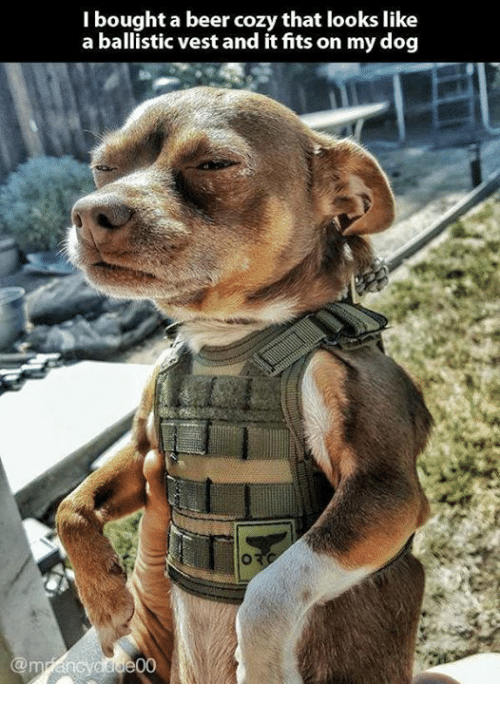 ballistics: I bought a beer cozy that looks like  a ballistic vest and it fits on my dog  de00
