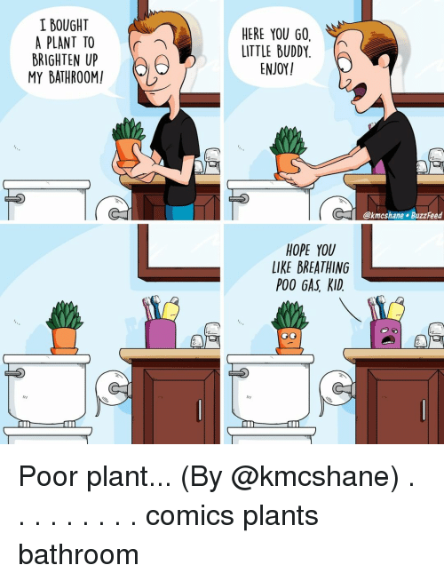 Memes, Buzzfeed, and Hope: I BOUGHT  A PLANT TO  BRIGHTEN UP  MY BATHROOM!  HERE YOU GO,  LITTLE BUDDY.  ENJOY  (「  @kmcshane BuzzFeed  HOPE YOU  LIKE BREATHING  POO GAS, KID. Poor plant... (By @kmcshane) . . . . . . . . . comics plants bathroom