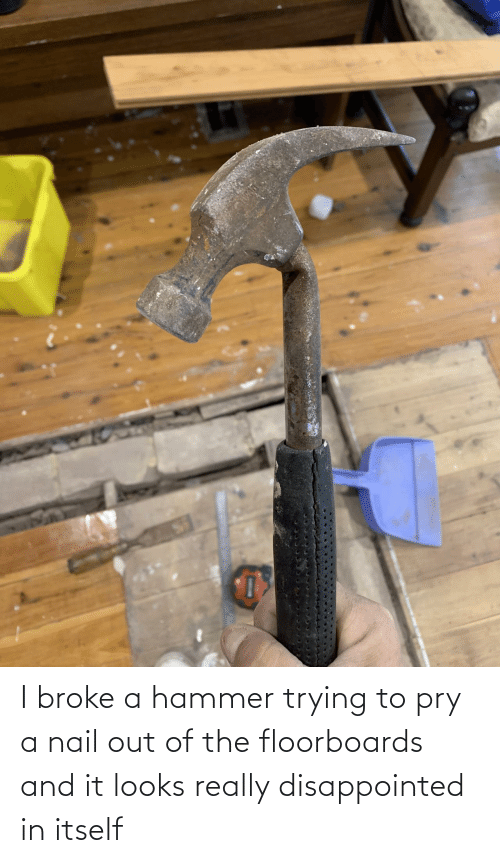 Disappointed: I broke a hammer trying to pry a nail out of the floorboards and it looks really disappointed in itself