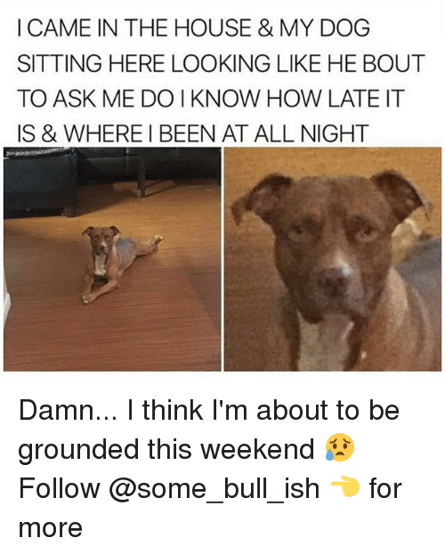 Memes, House, and I Came: I CAME IN THE HOUSE & MY DOG  SITTING HERE LOOKING LIKE HE BOUT  TO ASK ME DO I KNOW HOW LATE IT  IS & WHERE I BEEN AT ALL NIGHT Damn... I think I'm about to be grounded this weekend 😥 Follow @some_bull_ish 👈 for more
