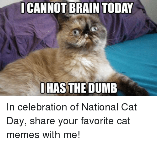 Have A Good Day Cat Meme