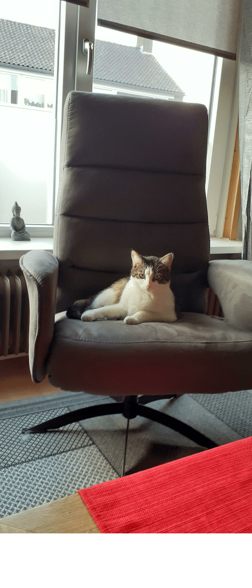 Sit In: I can't sit in the chair anymore