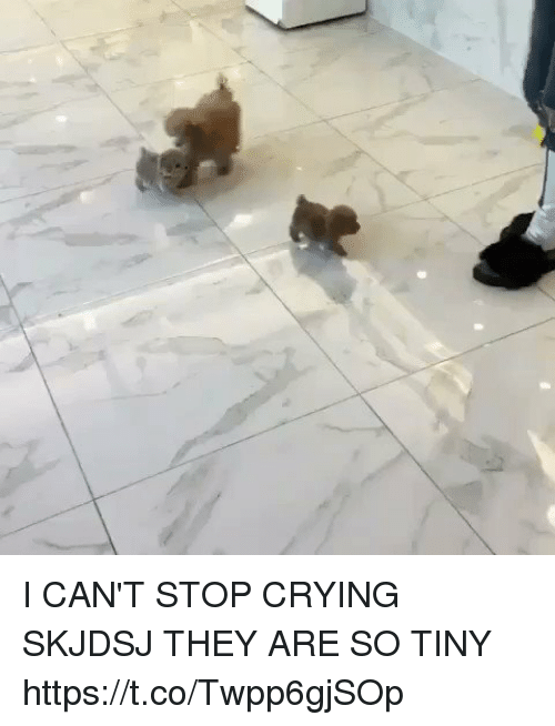 Crying, Girl Memes, and Tiny: I CAN'T STOP CRYING SKJDSJ THEY ARE SO TINY https://t.co/Twpp6gjSOp