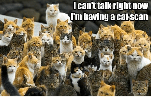 catscan: I can't talk right now  Im having a catscan