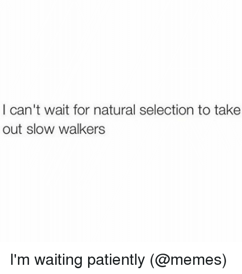 Waiting Patiently: I can't wait for natural selection to take  out slow walkers I'm waiting patiently (@memes)