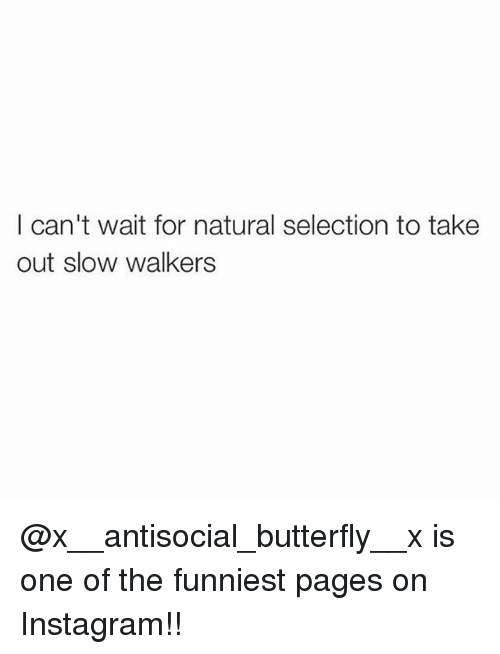 Instagram, Memes, and Butterfly: I can't wait for natural selection to take  out slow walkers @x__antisocial_butterfly__x is one of the funniest pages on Instagram!!