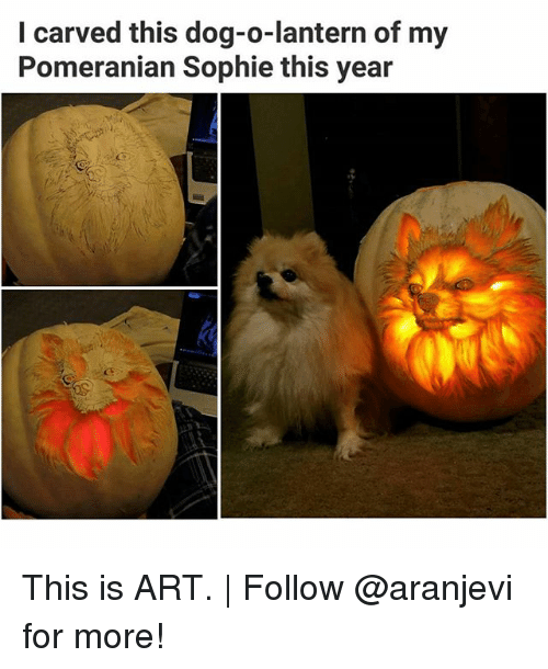 Memes, Pomeranian, and 🤖: I carved this dog-o-lantern of my  Pomeranian Sophie this year This is ART.   Follow @aranjevi for more!