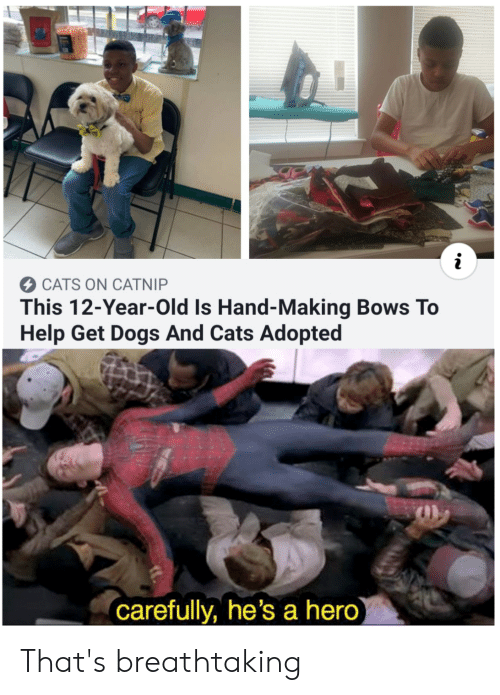 Cats On Catnip: i  CATS ON CATNIP  This 12-Year-Old Is Hand-Making Bows To  Help Get Dogs And Cats Adopted  carefully, he's a hero) That's breathtaking