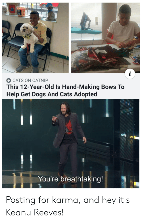 Cats On Catnip: i  CATS ON CATNIP  This 12-Year-Old Is Hand-Making Bows To  Help Get Dogs And Cats Adopted  You're breathtaking! Posting for karma, and hey it's Keanu Reeves!