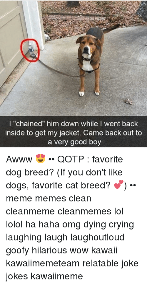 "Memes, Awww, and 🤖: I ""chained"" him down while I went back  inside to get my jacket. Came back out to  a very good boy Awww 😍 •• QOTP : favorite dog breed? (If you don't like dogs, favorite cat breed? 💕) •• meme memes clean cleanmeme cleanmemes lol lolol ha haha omg dying crying laughing laugh laughoutloud goofy hilarious wow kawaii kawaiimemeteam relatable joke jokes kawaiimeme"
