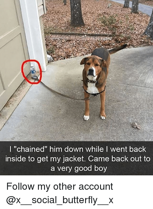 "Memes, Butterfly, and Good: I ""chained"" him down while I went back  inside to get my jacket. Came back out to  a very good boy Follow my other account @x__social_butterfly__x"