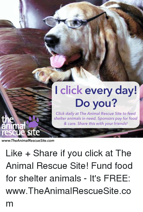 Animals, Click, and Food: I click  every day!  Do you?  Click daily at The Animal Rescue Site to feed  the  shelter animals in need. Sponsors pay for food  animat  & care. Share this with your friends!  rescue Site  www.TheAnimal Rescue Site.com Like + Share if you click at The Animal Rescue Site!  Fund food for shelter animals - It's FREE: www.TheAnimalRescueSite.com