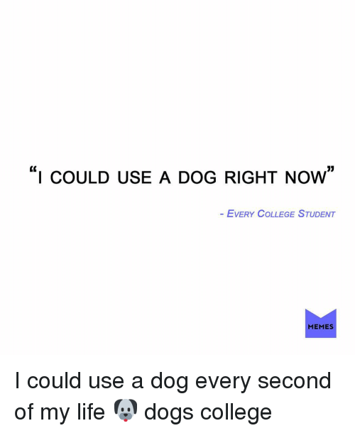 """College, Dogs, and Life: """"I COULD USE A DoG RIGHT NoW""""  EVERY COLLEGE STUDENT  MEMES I could use a dog every second of my life 🐶 dogs college"""