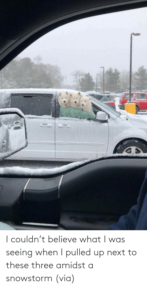 seeing: I couldn't believe what I was seeing when I pulled up next to these three amidst a snowstorm (via)